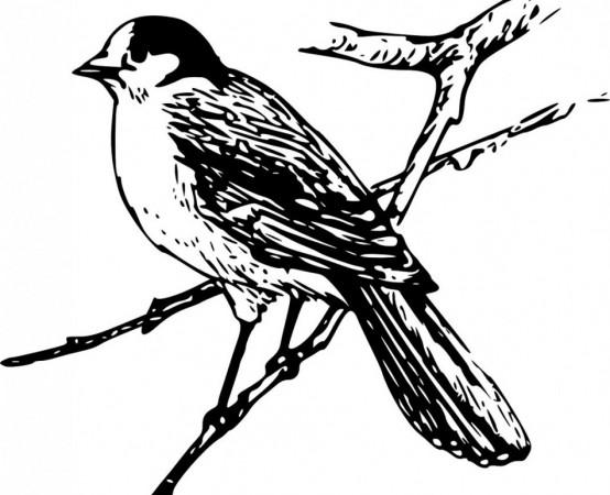waternish farm bird list