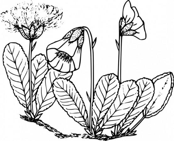 waternish farm plant list
