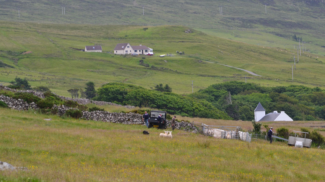 waternish farm sheepdog trials 4