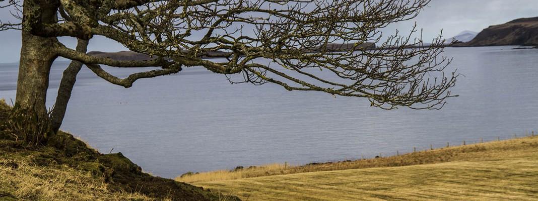 waternish farm tree sea view